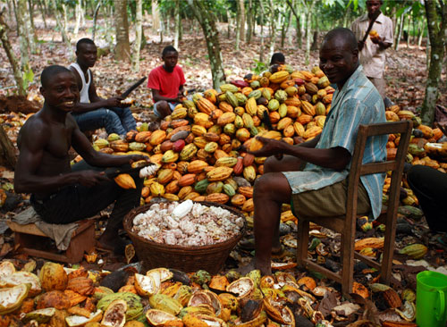 Ghana Cocoa farmers in picture