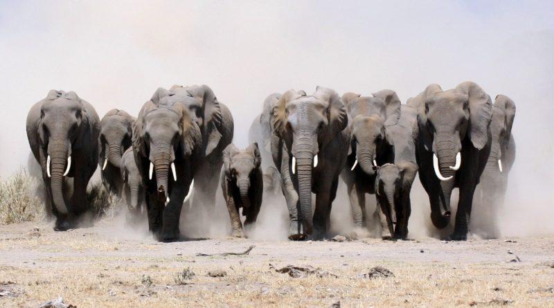 Photo Courtesy: elephantsinthelivingroom.org