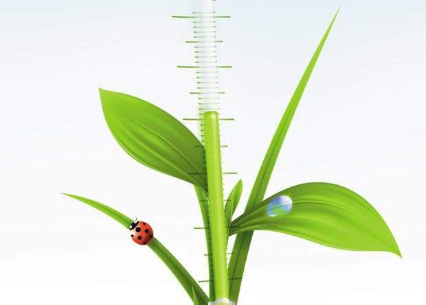 green-plant-with-thermometer