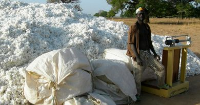 gmo-cotton_harvest_in_Dourtenga_735-350