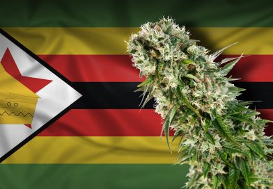 Zimbabwe Frees Up Marijuana For Medicinal, Scientific Use