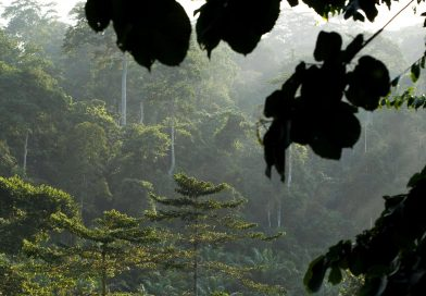 Gov't Mortgages Atewa Forest To Chinese For $10b; Sparks Resistance