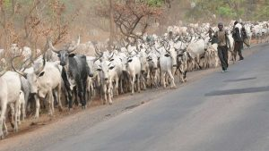 Photo Courtesy: The Guardian, Nigeria